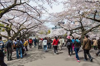 千鳥ヶ淵の桜17.jpg