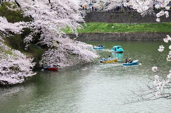 千鳥ヶ淵の桜21.jpg