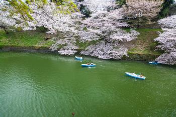 千鳥ヶ淵の桜22.jpg
