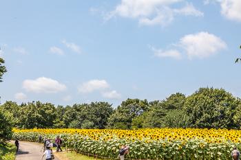 昭和記念公園26.jpg