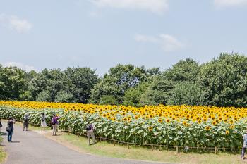 昭和記念公園27.jpg