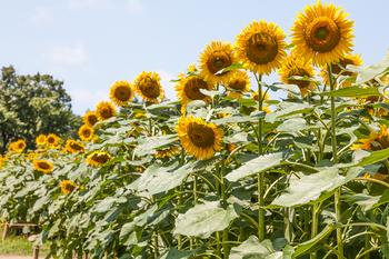 昭和記念公園8.jpg