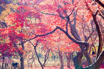 神代植物園_07.jpg