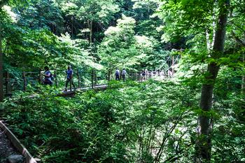 4号路 つり橋3.jpg