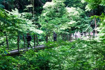 4号路 つり橋4.jpg