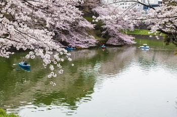 千鳥ヶ淵の桜13.jpg