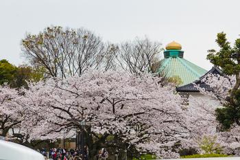 千鳥ヶ淵の桜24.jpg