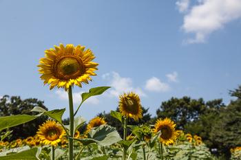 昭和記念公園16.jpg