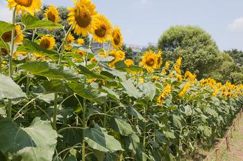 昭和記念公園6.jpg