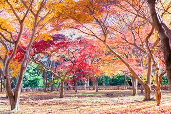 神代植物園_06.jpg