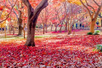 神代植物園_09.jpg